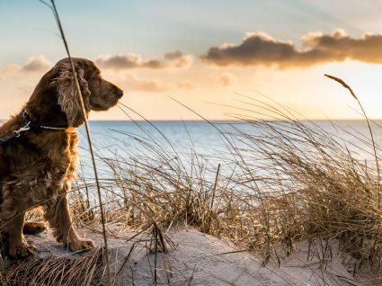 Tudo o que precisa de garantir para levar o seu cão à praia em segurança