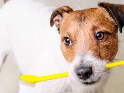 5 Motivos para escovar os dentes do seu cão frequentemente