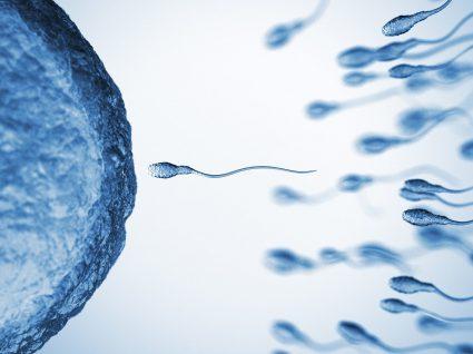 Sabe quantos dias após a ovulação ocorre a fecundação?