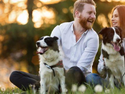 Ter cão ou cadela? Saiba qual a melhor opção para si!