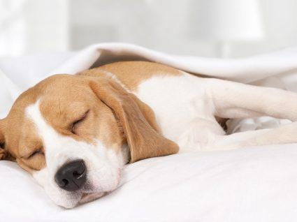 4 Cuidados a ter com uma cadela grávida: fique atento