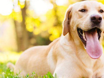 Animais de estimação e calor: saiba quais os cuidados a ter