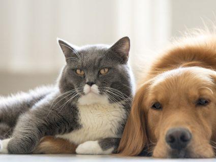 12 Dicas para deixar o seu animal sozinho em casa e em segurança