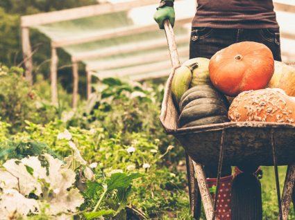 Mitos da agricultura biológica: uma nova tendência alimentar