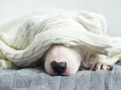 Esgana: uma doença que pode levar o seu cachorro à morte