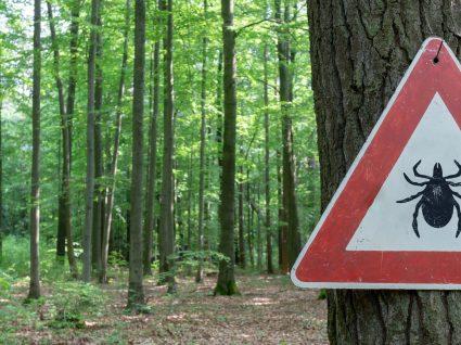Sabia que a picada de carraça pode ser fatal?