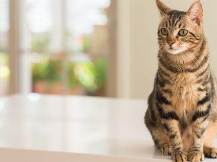 Sabe qual a idade dos gatos em idade humana?