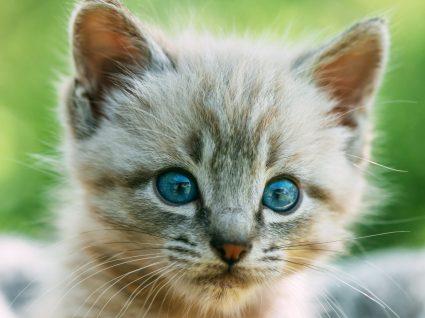 Sabe como cuidar de um gato recém-nascido? Aprenda as melhores dicas