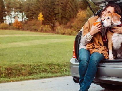 9 dicas para viajar de carro com o cão sem problemas