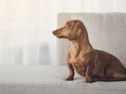 O cão não obedece aos seus comandos? Calma, há solução!