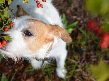 13 alimentos perigosos para cães a evitar a todo o custo