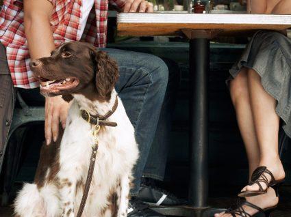 Aqui todos entram: conheça 6 restaurantes pet friendly em Lisboa