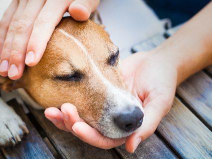 Doença de Lyme em cães: tudo o que precisa de saber