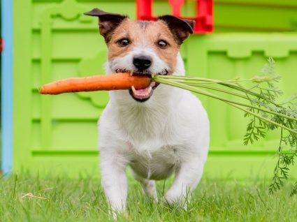 9 alimentos humanos que os cães podem comer: saiba quais são