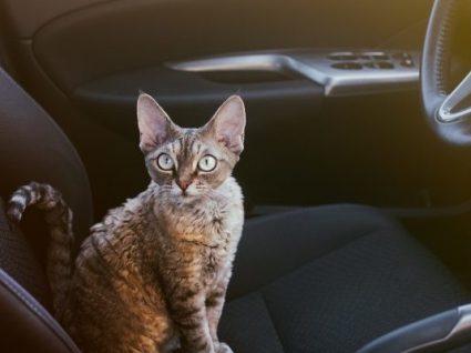 5 dicas úteis para viajar de carro com um gato