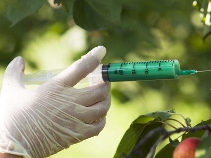 5 mitos a desvendar sobre organismos geneticamente modificados