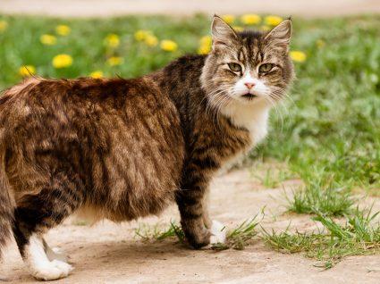 Tudo o que deve saber sobre a alimentação da gata grávida