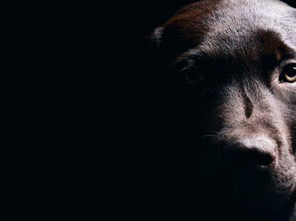 Hospital Veterinário da U.Porto lança campanha contra abandono de animais