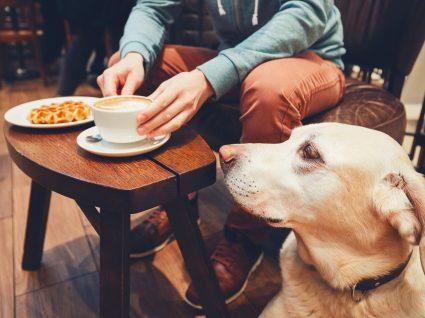 Animais em estabelecimentos comerciais: o que diz a lei?