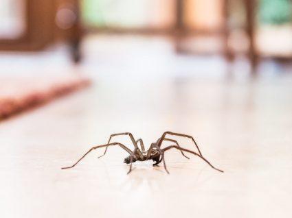 Picada de aranha: sabe reconhecer os sinais?