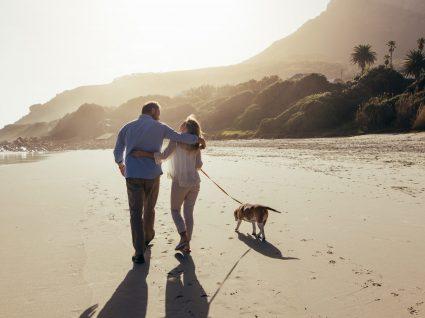 7 cuidados a ter para levar o cão à praia