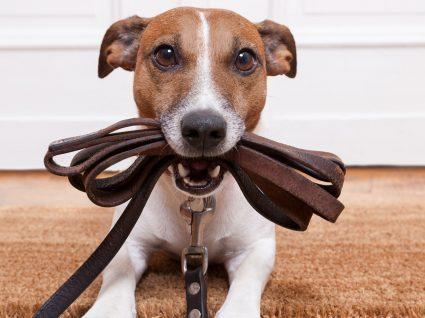 9 erros comuns na hora de educar o cão