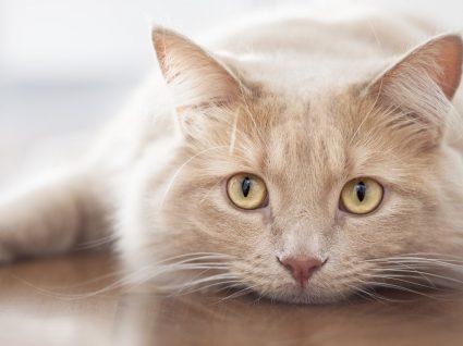 O gato não come a ração: será sinal de alarme?