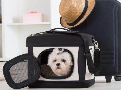 Sabe como habituar o cão à transportadora?