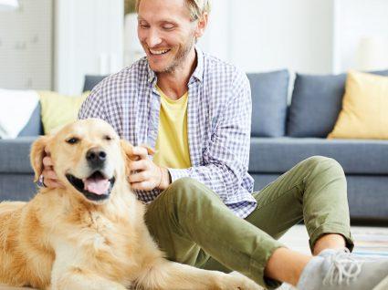 8 hábitos e rotinas positivas para o cão ser calmo e obediente
