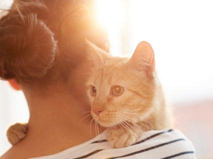 Reforço positivo nos gatos: é possível educar os felinos?