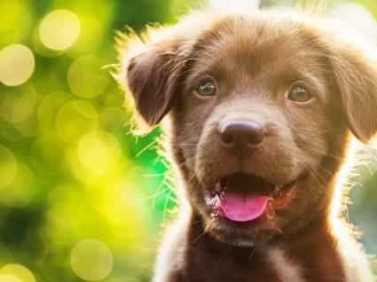 Como cuidar do pelo do cão? Conheça 6 dicas essenciais