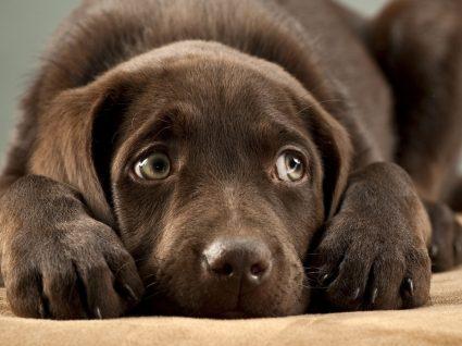Prisão de ventre em cães: saiba quando se deve preocupar