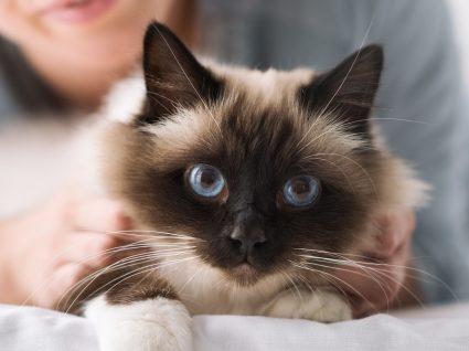 Os gatos sentem ciúmes? Ou será apenas stress?