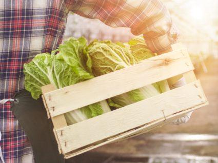 12 alimentos que pode replantar para bem do ambiente e da carteira!