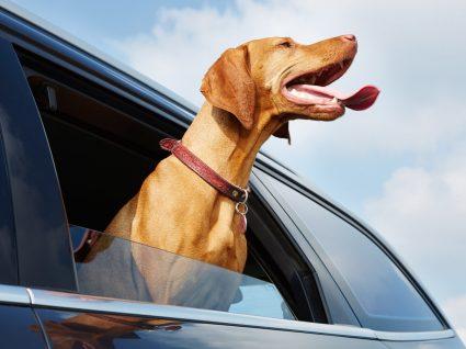 Golpe de calor nos animais: o que fazer em caso de emergência