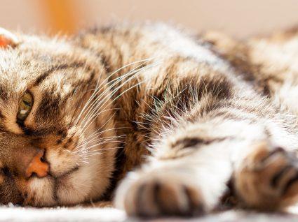 7 dicas para cuidar do gato em idade avançada