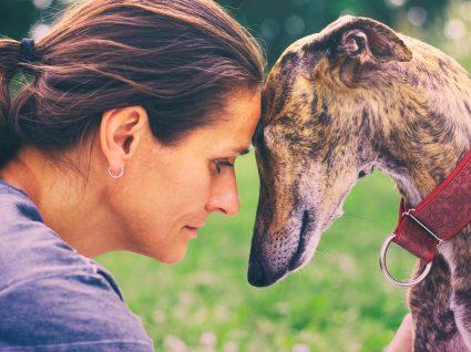 9 dicas para cuidar do cão em idade avançada