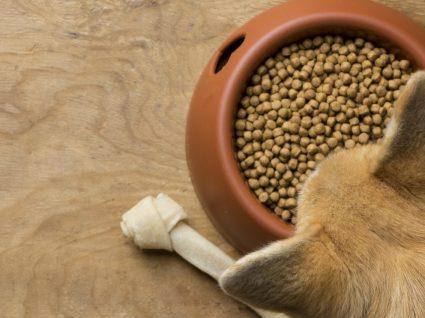 8 sinais de alergia alimentar em cães: fique atento