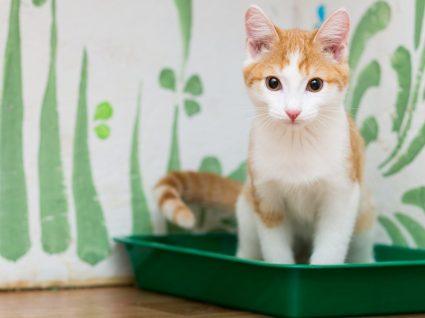 Qual a melhor areia para gato? Tudo o que precisa para o seu melhor amigo