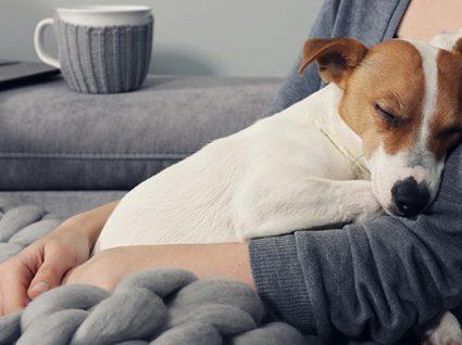 Epilepsia em cães: tudo sobre a doença