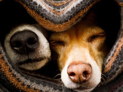13 medicamentos para humanos que servem para cães
