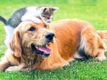 É possível ensinar um cão mais velho? A resposta é sim!