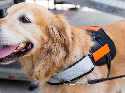 Tudo sobre cães de assistência