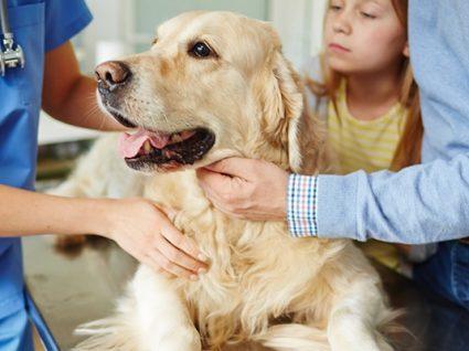 Como evitar calos no cotovelo do cão?