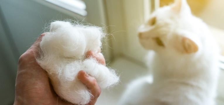 sinais de alarme no animal bolas de pelo de gato