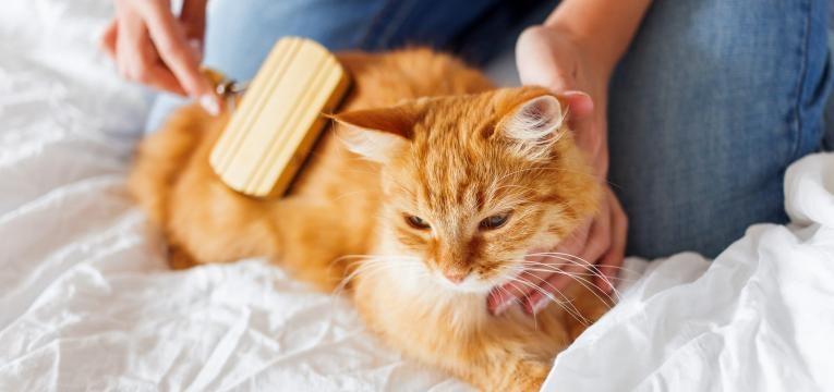 escovar pelo de gato