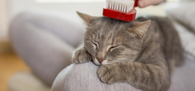 Escova para gatos