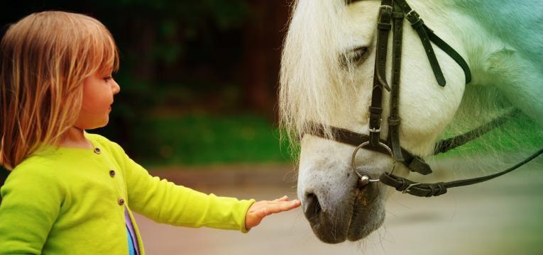 equitacao terapeutica