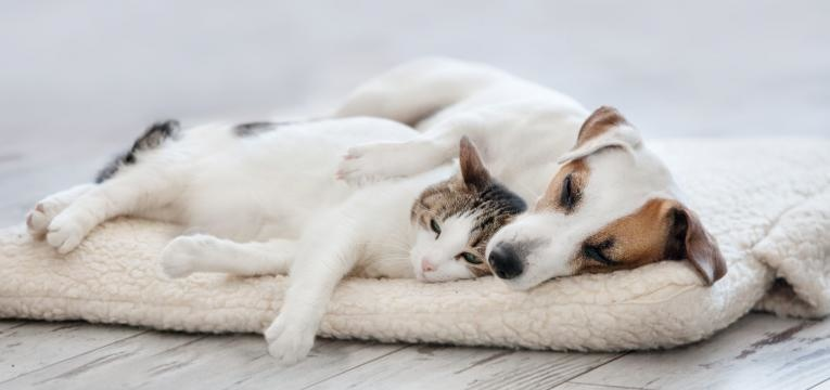 cao ou gato