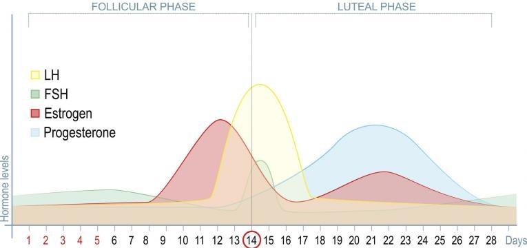 Niveis de energia durante o periodo